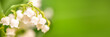 Lily of the valley flower close up, green nature panoramic background. May 1st, May Day web banner