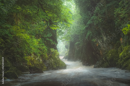 Obraz na plátne The green, lush, atmospheric and ethereal gorge ravine Fairy Glen and rushing water of River Conwy near Betws-y-Coed in North Wales