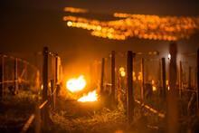 Lutte Contre Le Gel De Printemps Dans Les Vignes De Chablis En Bourgogne - Technique Des Bougies Ou Chaufferettes (2016)