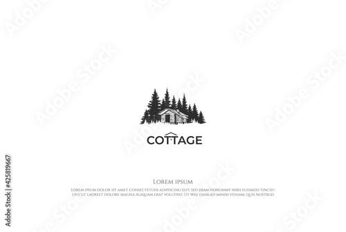 Pine Cedar Spruce Conifer Evergreen Fir Larch Hemlock Cypress Trees Forest with Tapéta, Fotótapéta