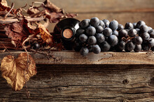Bottle Of Red Wine With Grapes And Dried Vine On An Old Wooden Table.