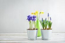 Spring Flowers In  Flower Pots