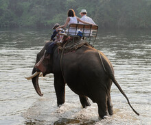 Tourists Ride Elephant By The River, To The Place Of Bathing