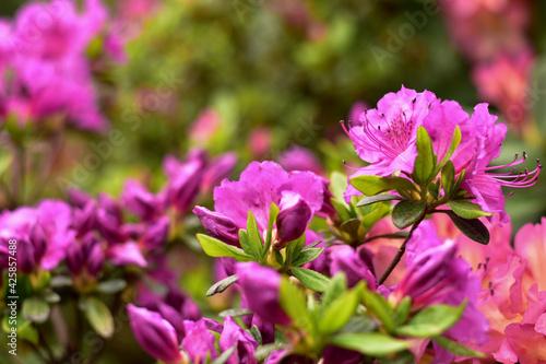 Fototapeta Spring flowers obraz