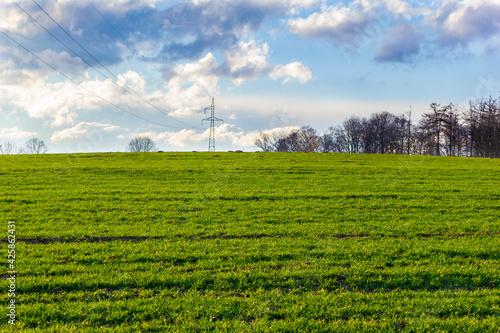 Fototapeta Green Grass obraz