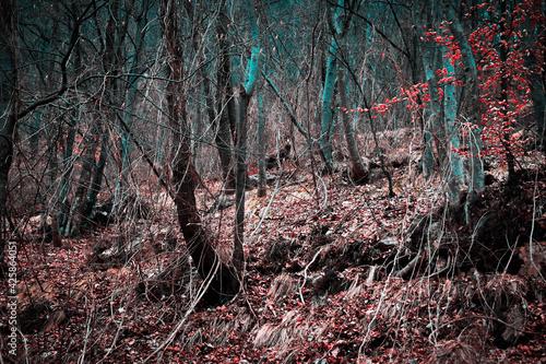 Incontri nel bosco Fototapet