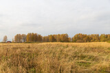Autumn nature in the countryside. Yellowed forest and meadow