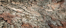Texture Of Old Weathered Tree Bark