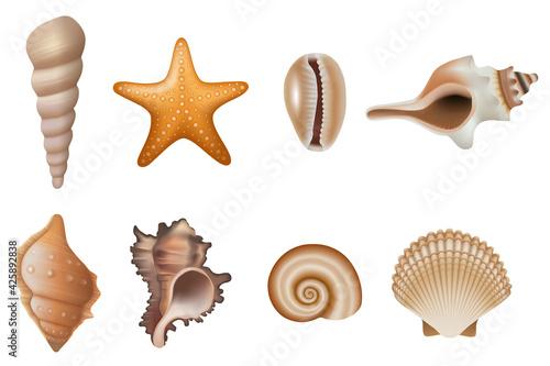 Fotografija set of isolated seashells and starfish