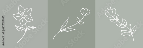Fotografie, Obraz Set of Hand Drawn Organic grass Leaves and flowers, Art floral elements, Botanic