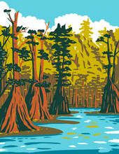 WPA Poster Art Of Baldcypress Tree Growing In The Southern Swamp Of Apalachicola National Forest Located In The Florida Panhandle In Works Project Administration Style Or Federal Art Project Style.