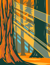 WPA Poster Art Of Sunlight Through The Giant Sequoia Trees Of Sequoia National Park Located In Sierra Nevada, California Done In Works Project Administration Style Or Federal Art Project Style.