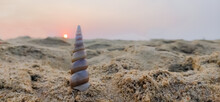 Scenery Of Sunset In Beach With Turritella (turret Shell) Isolated. Meditation. Vacation. Peaceful.