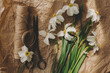 Stylish spring flowers rural still life. Daffodils, scissors, twine in sunny light on rustic paper