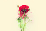 Creative image of beautiful red Buttercup flower on artistic ink background. Top view with copy space
