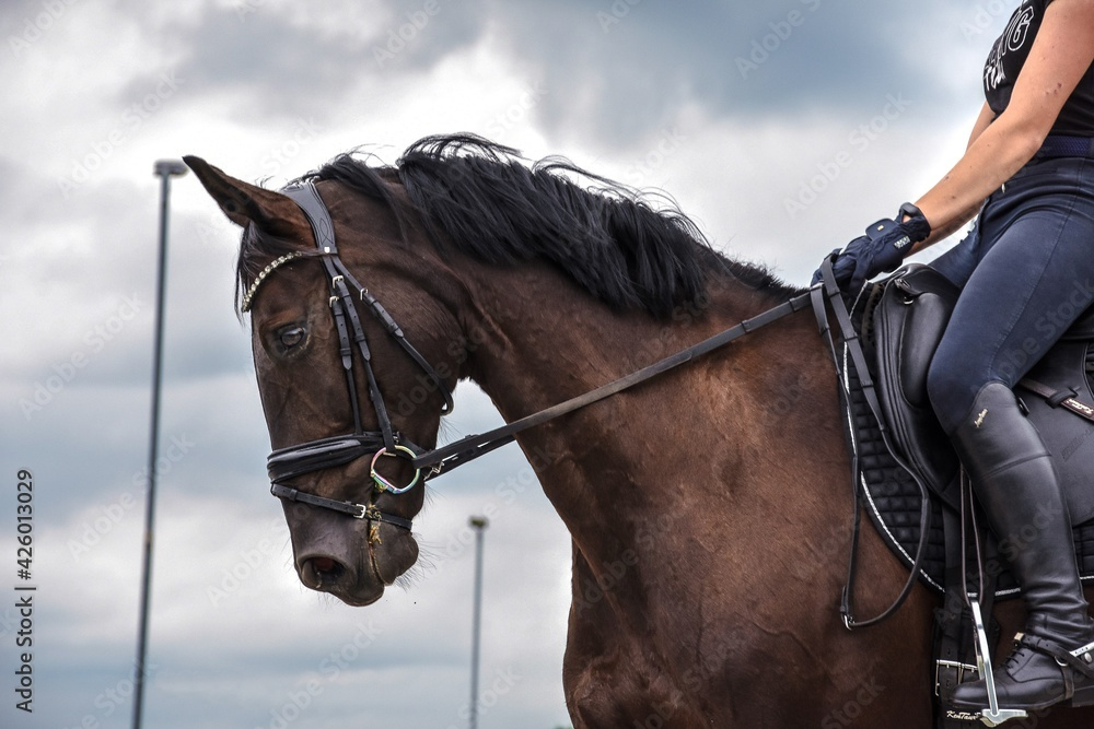 Fototapeta Głowa konia na tle nieba,