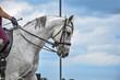 Głowa siwego konia