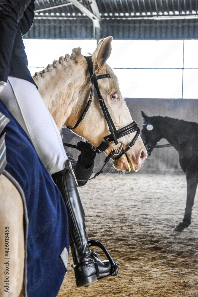 Fototapeta Piękny koń jasnej maści.