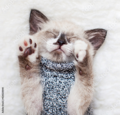 Obraz Kitten sleep on white plaid - fototapety do salonu