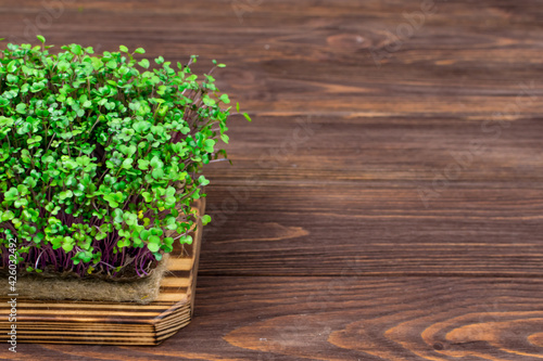 Canvas Print Homemade red cabbage microgreens on a cutting board on a wooden table