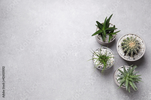 Beautiful Aloe, Cactus and Nolina in pots on grey table, flat lay with space for text. Different house plants