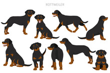 Rottweiler Clipart. Different Poses, Coat Colors Set