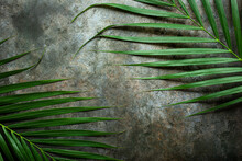 Creative Nature Layout Made Of Tropical Leaves. Summer Concept. Palm Leaf On Wall. Nature Beach Background Layout With Free Text Space.