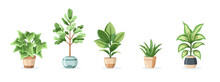 Set Of Home Plants In Pots Isolated On White Background