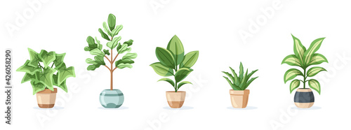 Fotografie, Obraz Set of home plants in pots isolated on white background