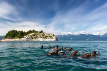 Curious Steller Sea Lions (Eumetopias Jubatus), South Marble Islands, Glacier Bay National Park, UNESCO World Heritage Site, Alaska, United States Of America
