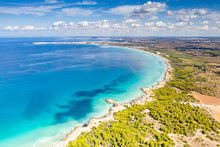 Punta Della Suina Sand Beach Framed By Mediterranean Pine Trees, Aerial View, Gallipoli, Lecce Province, Salento, Apulia, Italy