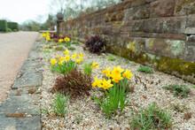 Park Blumenbeet Garten Natur Kiesel Osterglocken Osterglöckchen