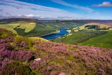 View Of Upper Derwent Reservoir And Flowering Heather In August From Derwent Edge, Peak District National Park, Derbyshire, England, United Kingdom