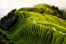 Top View Of A Path In The Longsheng Rice Terraces Also Known As Dragon's Backbone Rice Terraces, Guanxi, China