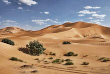 Sand Dunes And Bushes In The Sahara Desert, Merzouga, Morocco, North Africa