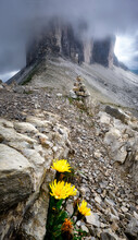 Three Peaks Covered By Clouds And Some Rocks And Yellow Flowers In The Foreground, Dolomites, Trentino-Alto Adige, Italy