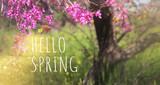 spring blossom image. tree floral background
