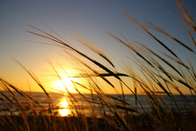 Reeds At The Beach During Sunset