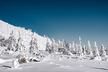 Panorama Of Winter Forest Under Blue Sky. Mountain Valley With Snow Firs On Sunny Day