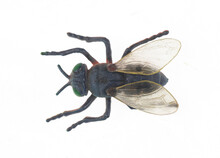 Toy Insect Fly Isolated On White Background