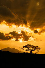 Africa, Kenya, Silhouette Of Acacia Tree Against Sky At Sunset