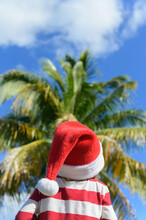 United States, Florida, Boca Raton, Rear View Of Boy (6-7) Wearing Santa Hat And Striped Sweater Looking At Palm Tree
