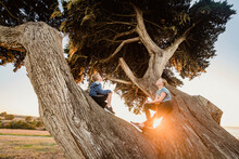 United States, California, Cambria, Boy (10-11) And Girl (12-13) Sitting On Tree In Landscape At Sunset