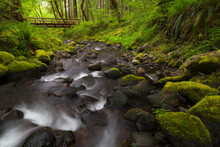 United States, Oregon, Rocky Creek And Footbridge In Forest