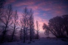 United States, Idaho, Bellevue, Silhouetted Trees At Dawn