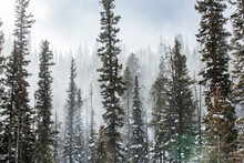 United States, Idaho, Sun Valley, Snowy Forest In Winter