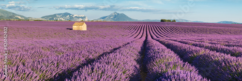 Lavender fields in Valensole Plateau at sunset Fototapeta