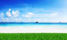 Grass On The Beach With Sea Scape