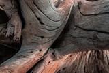 Fototapeta Fototapety z morzem do Twojej sypialni - Piękne naturalne tło, drewniany konar pełen pęknięć, strukturalna tekstura.