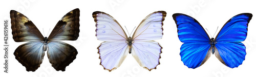 Foto Set of butterflies of different colors with outstretched wings isolated on white background
